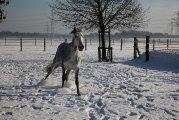 Schnee24