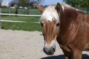 Pferd im Offenstall