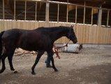 Weitere Pferde_1