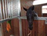 Weitere Pferde_3