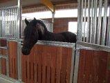 Weitere Pferde_5